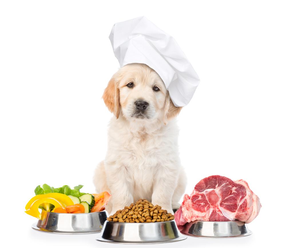 Intolleranze alimentari nel cane e Allergie