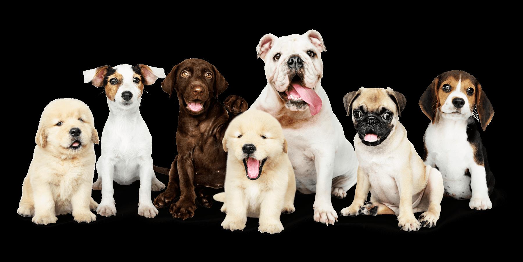 Ipofertilità canina