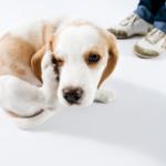 Facciamo il punto sulla protezione antiparassitaria del cane