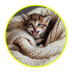 Consigliati da noi... per gatti