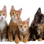 Quanto costa possedere un gatto?