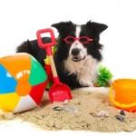 In Vacanza con i Pets… Consigli del Veterinario!