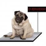 I rischi dell'obesità in Cani e Gatti