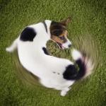 Autotraumatismo nel cane: un caso clinico